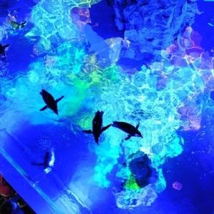 5日間限定!すみだ水族館のイベント「Penguin Music Night」とは