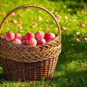 秋の味覚狩りは買うよりお得♡子連れで食べ放題ありの農園に行こう♪