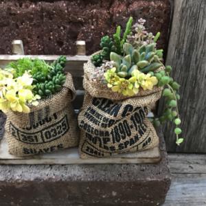 《麻袋×多肉植物》がおしゃれ♡ガーデニングへの活用アイデア集
