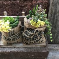 【麻袋×多肉植物】がおしゃれ♡ガーデニングへの活用アイデア集