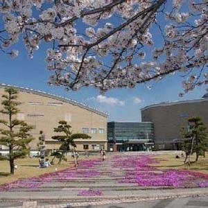 ママも子どもと一緒に読書しましょ!千葉県白井市の図書館4選