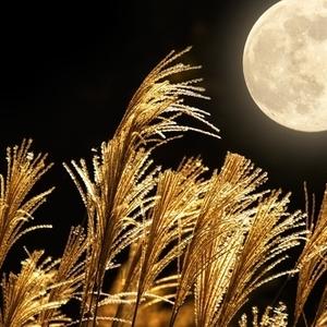 今年は9月27日!子供と一緒に楽しめる「お月見イベント」3つ