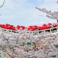 【大阪編】お花見の季節到来!桜の名所10選