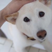"""高垣麗子さんも悩んだ""""愛犬の赤ちゃん返り""""どんな対応をしたら良い?"""