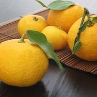 誰說只有冬至能品嚐!讓整個冬季都能盡情享受柚子風味♪