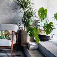 自然又摩登♡海外植物風室內設計&陳列IDEA♪