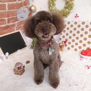 【東京】おすすめの犬カフェ7選♡家族でお出かけしませんか?