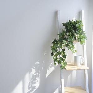 夏に観葉植物が枯れてしまう……4つのNGとその対策とは?