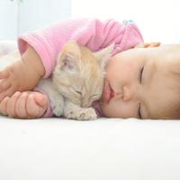 赤ちゃんと猫って同居できるの?注意したい4つのポイント