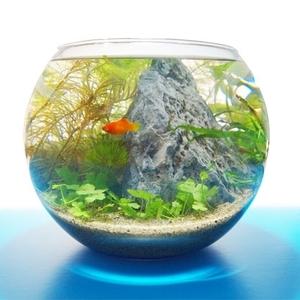 自宅で作れる!水の惑星《アクアリウム》で癒しインテリア♪