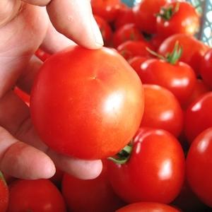 もっと美味しいおうちご飯に♡トマトの種類と特徴を知って使い分け♪