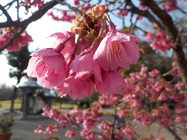 愛知の名城公園