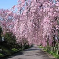 【愛知編】桜の名所10選♪今年も家族でお花見に出かけよう!