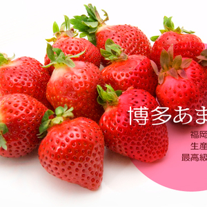 ビタミン豊富な美肌の味方「いちご」を徹底解剖【全国有名産地編】