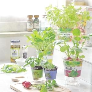 キッチンで育てよう♡再生栽培「リボベジ」向き野菜4つ♪