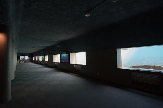 千歳水族館の水中観察窓