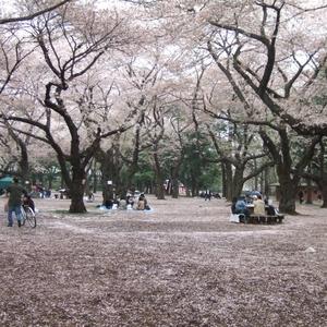 まだ間に合う!東京お花見 名所へ桜見物しましょ♡