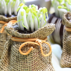 マンネリ食卓に新顏プラス!今が旬の「新芽野菜」を食べよう♪