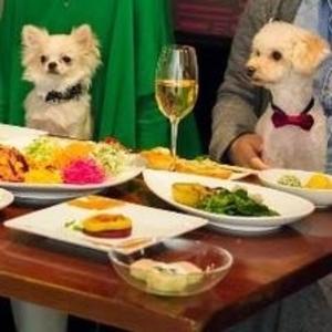 愛犬と一緒にランチ♡店内ペット可のおすすめレストラン