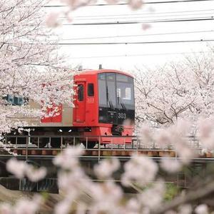 【福岡編】桜の名所10選♪学びながら楽しんでお花見しよう!