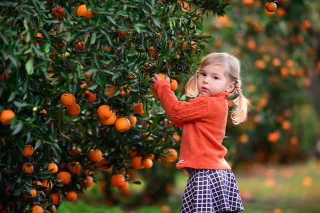 オレンジを摘む子供