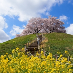 【埼玉編】桜の名所10選♪見るだけじゃない新しい楽しみを発見!