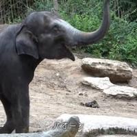 人気声優・島﨑信長がゾウやバクを熱演!?トヨタ公式 動物の「逃げ方」動画公開。