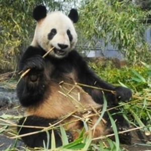 夏休みの子連れお出かけにオススメ♪子供の大好きな人気の動物園4つ