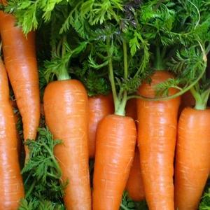 冷凍保存した方がお得!旨みも栄養素もUPする食材4選