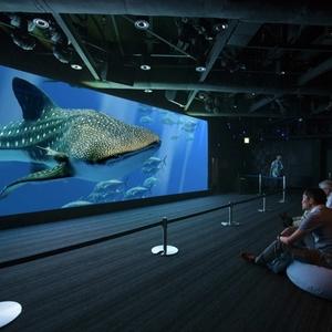 ハイレゾ体験もできる水族館「Sony Aquarium」にお出かけしたい♪