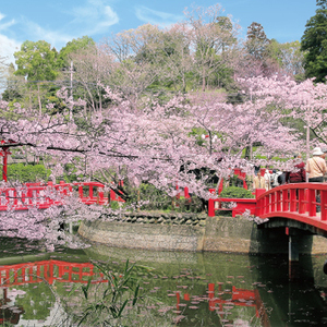 【千葉編】桜の名所10選♪家族で楽しめる桜プラスαの隠れスポット