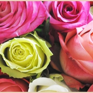HAPPYを運んで来てくれると話題♡広尾「アフリカの花屋」に注目!