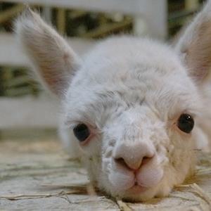 会えるのはこの夏だけ♡可愛い動物の赤ちゃんがいる動物園に行こう♪