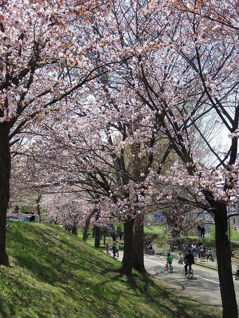 札幌の農試公園