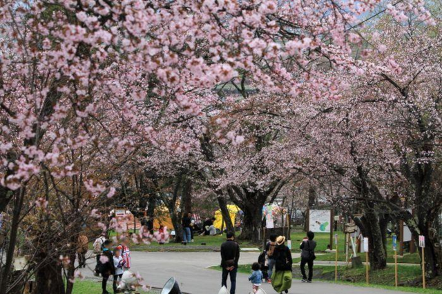 北海道の旭山公園
