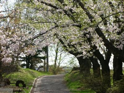 北海道の小樽公園