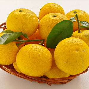 """要チェック!ジューシーで美味しい柑橘類の""""新顔""""さん3つ"""